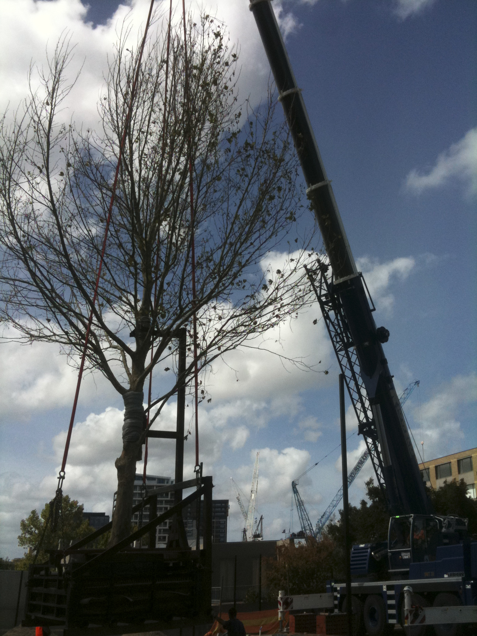 Tree lifting - JFK Mobile crane hire and rigging Melbourne