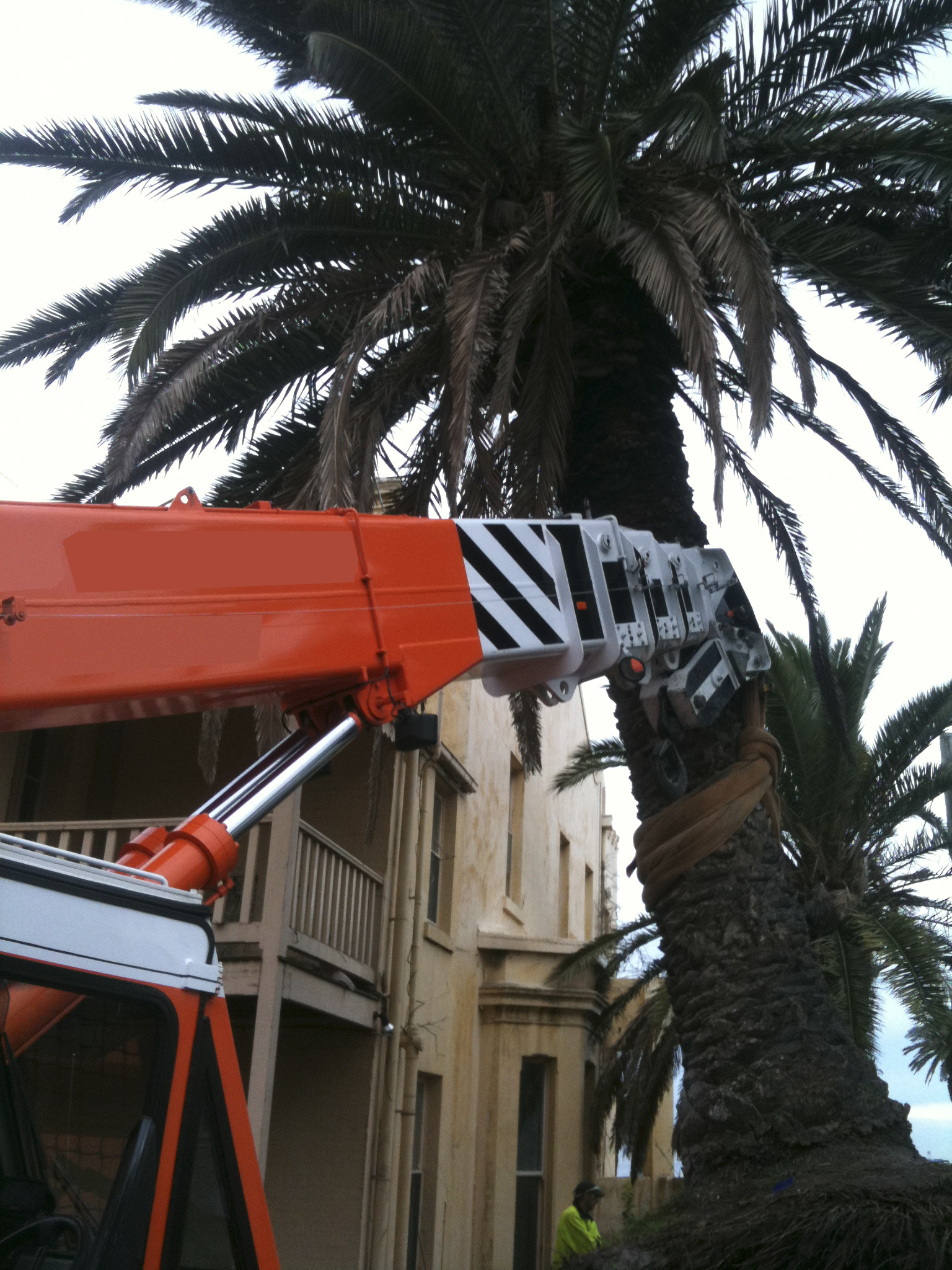 Tree lifting - JFK Mobile crane hire and rigging